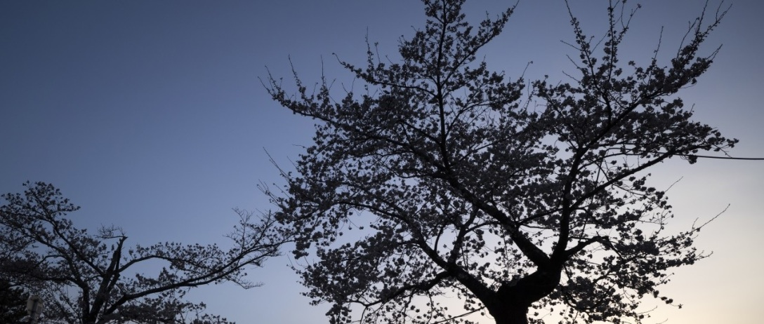 Featured Image Banner: Tree